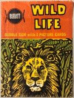 Jungle life , Barratt engelse uitgave